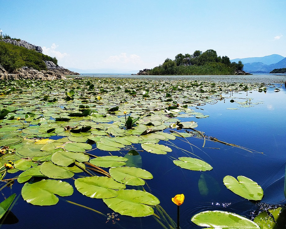 Beauty of Lake Skadar